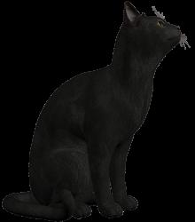 cat_top_l