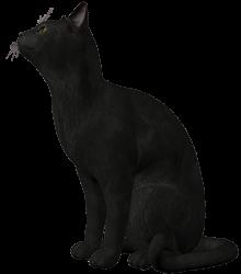 cat_top_r2